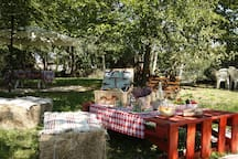 area pic-nic