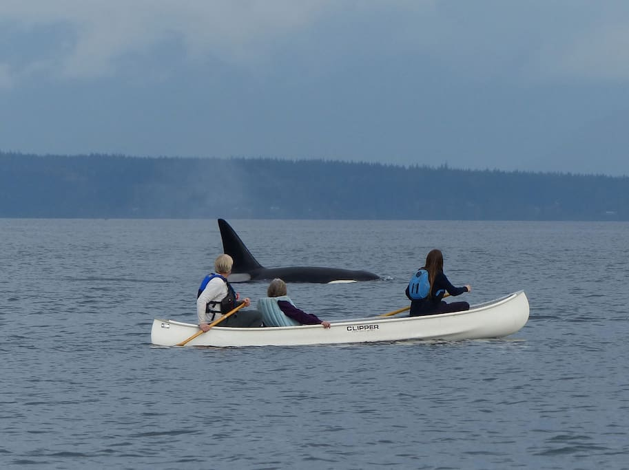Canoeing with the Orca's in front of the property.