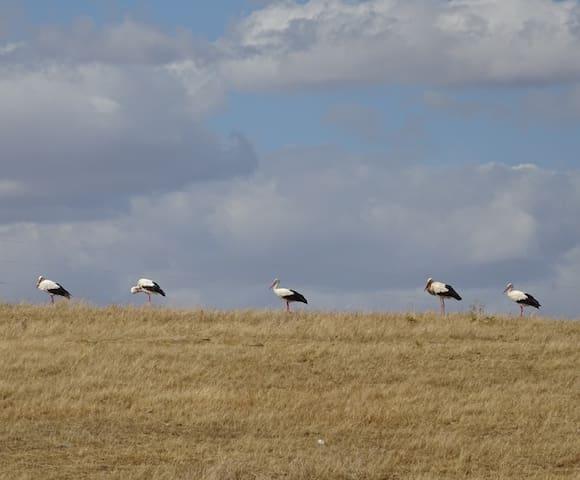 Landscape and storks