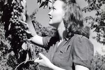 Mary Anne, our grandmother, picking cherries in the family orchard (circa 1938).