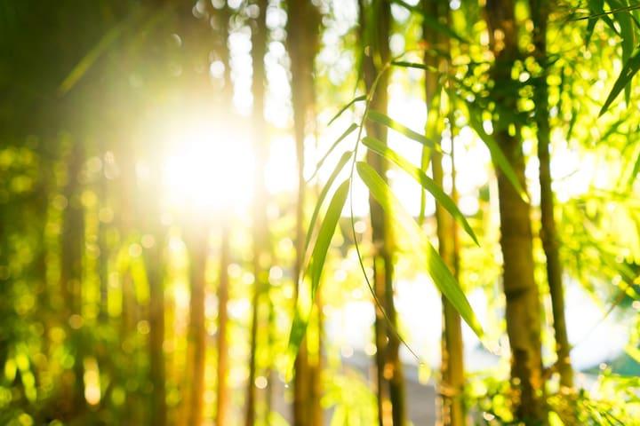 Dragonfly Villa (Modern Bamboo)