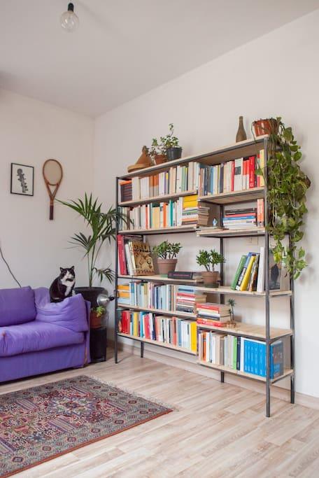 The living room with our fat cat, Davide. Il salotto con il nostro gattone, Davide.