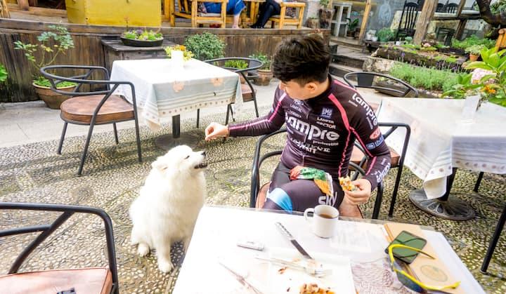 """在白沙古镇咖啡馆享用下午茶,老板的这只萨摩耶又来""""讨好""""人了!"""