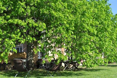 Chai restauré au milieu des vignes - House