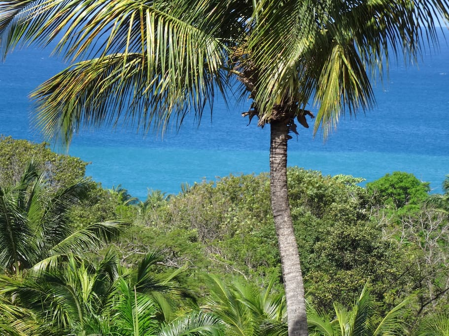 View on Grande-Anse beach from our place/Vue de chez nous
