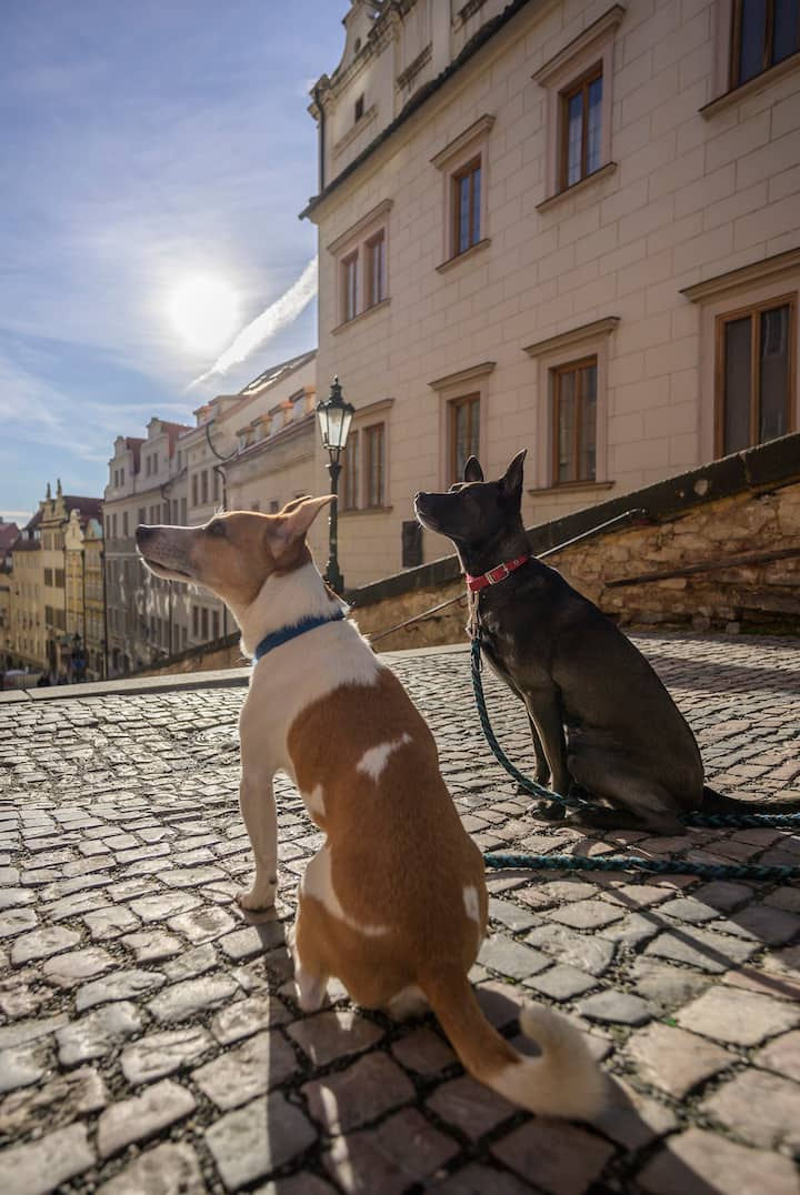 Doggie Tour Guides