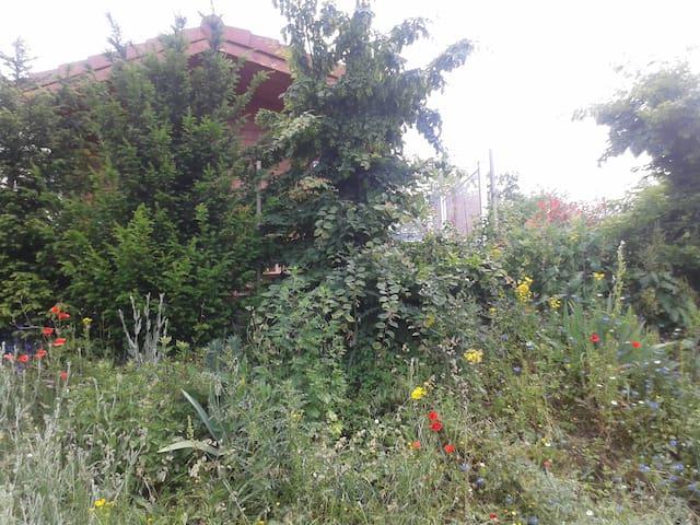 environnement végétalisé fleuri