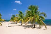 Raked and groomed beach with many palms and chaise lounges