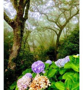 Quinta biológica, com vista, na Serra de Sintra
