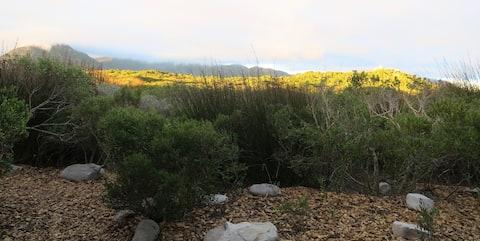 Moonshadow stays, Kommetjie fynbos forest hideaway