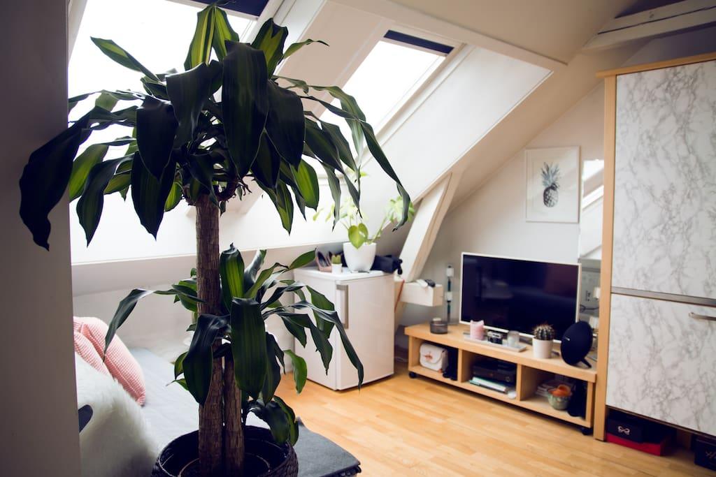 Livingroom w/ TV & Refrigerator