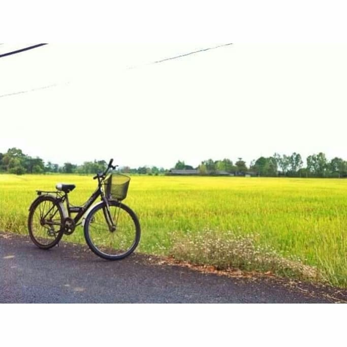 Paddy field in the village
