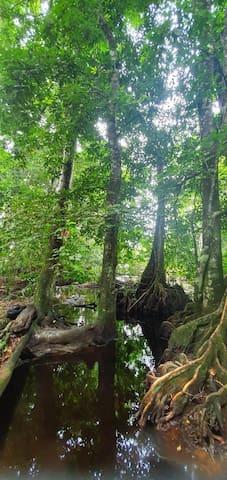 Conectese del mundo cotidiano la naturaleza  aqui.