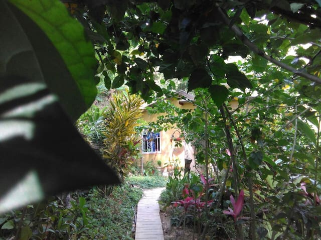 Butterfly garden Minca - Minca