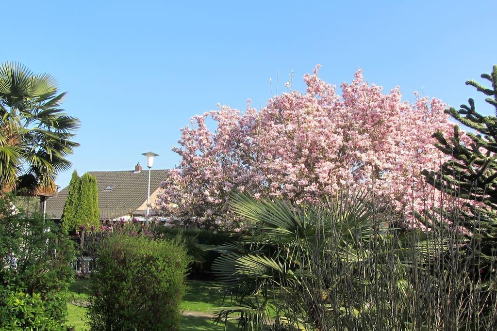 Frühlingsstimmung im N- Garten