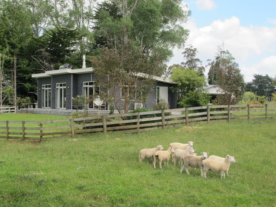 Gum Tree Haven and family sheep/ beef cattle farm