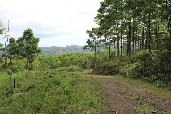 Hermosa Cabaña en Turrialba : Casita de las ovejas