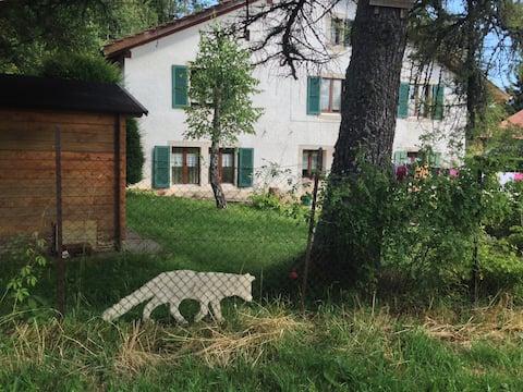 Haus und Fuchs und Lärche