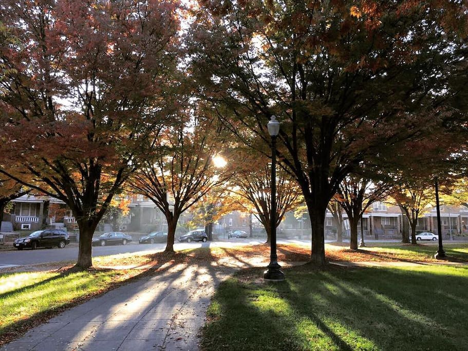 A beautiful fall morning in our neighborhood in Petworth | Washington, D.C.