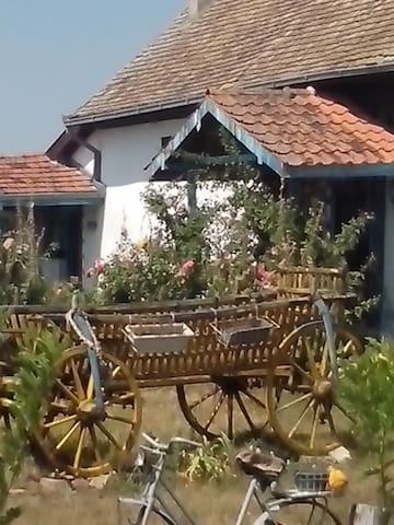 Plavi Salas, Čenej, Srbija