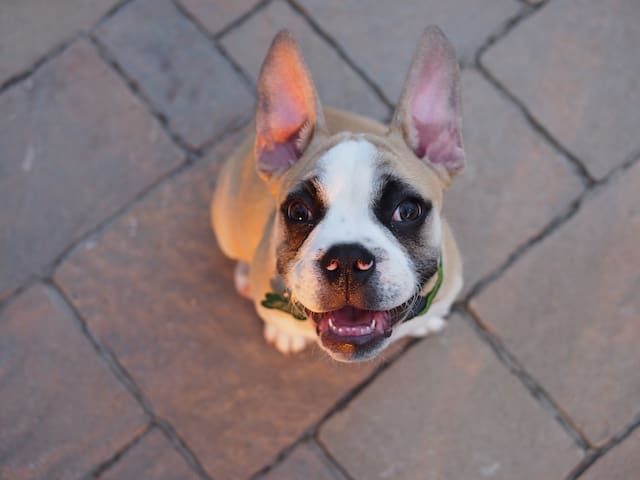 Our pup, Napoleon will be excited to meet you as well!