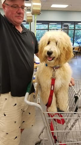 Yes, we are pets friendly, 4 legged Whole Foods shopper saying hi !!! Doggie, do you like to shop?  'No, but I like to pose and I adore my owner and so I follow.'