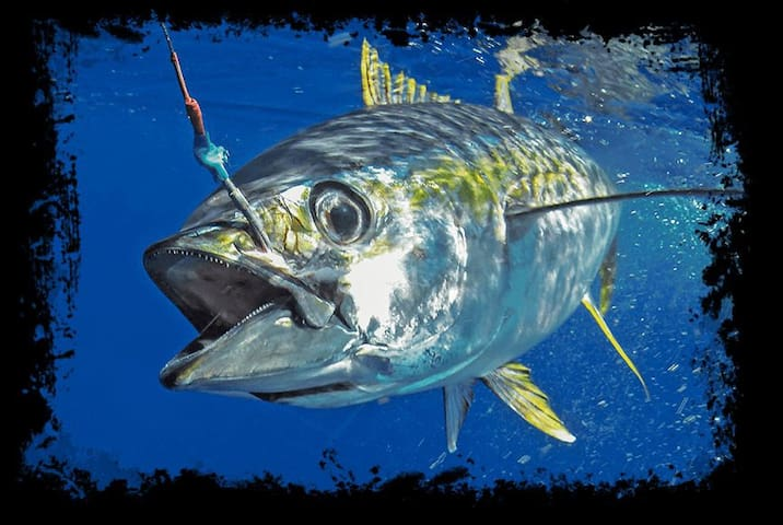 Fishing Trips in Maldives with Accomodation