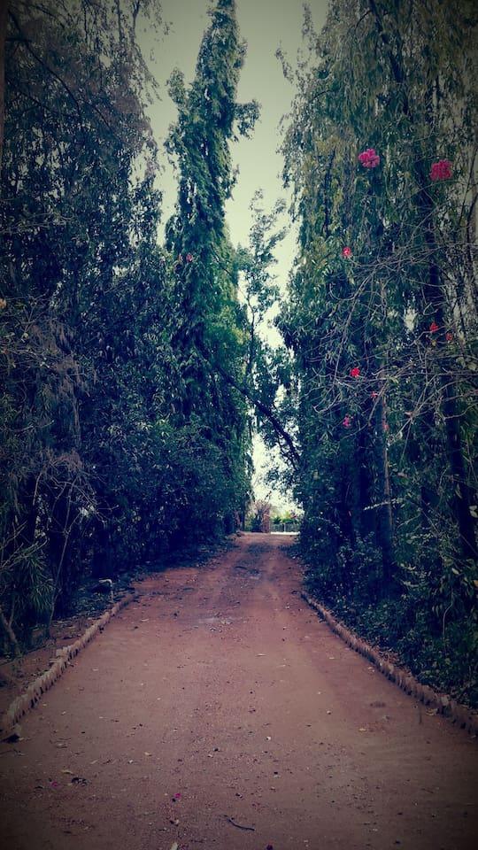 Entrance Path