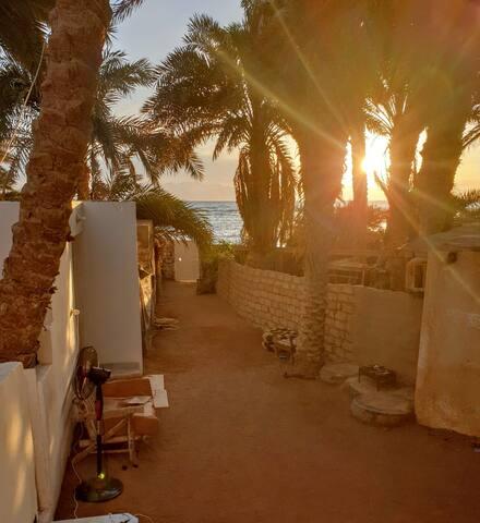 The Palm-tree house