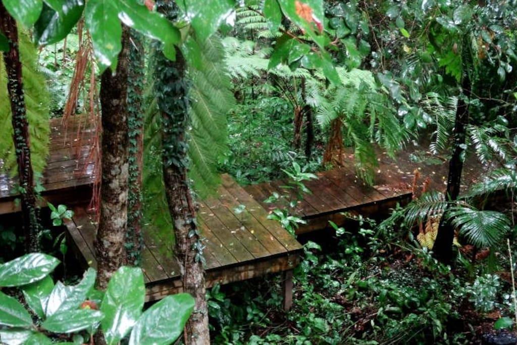 Rainforest walks in Kodalilla National Park.