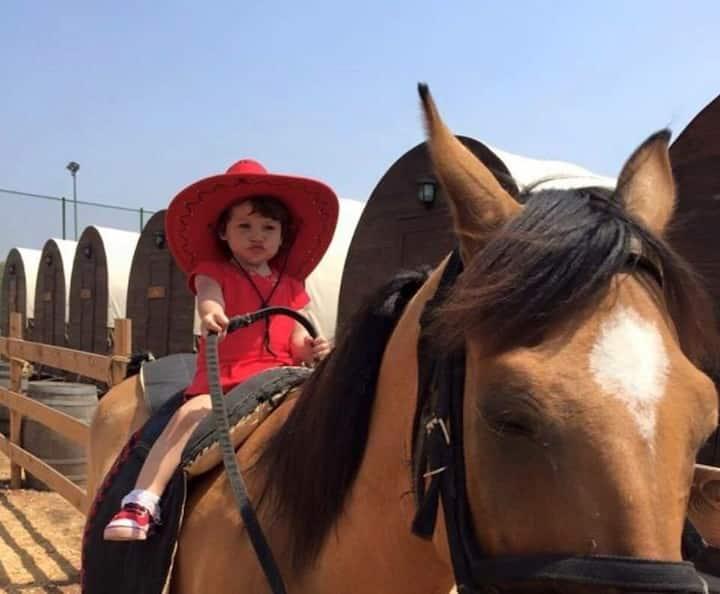Wonderful experience Horse Wagons.