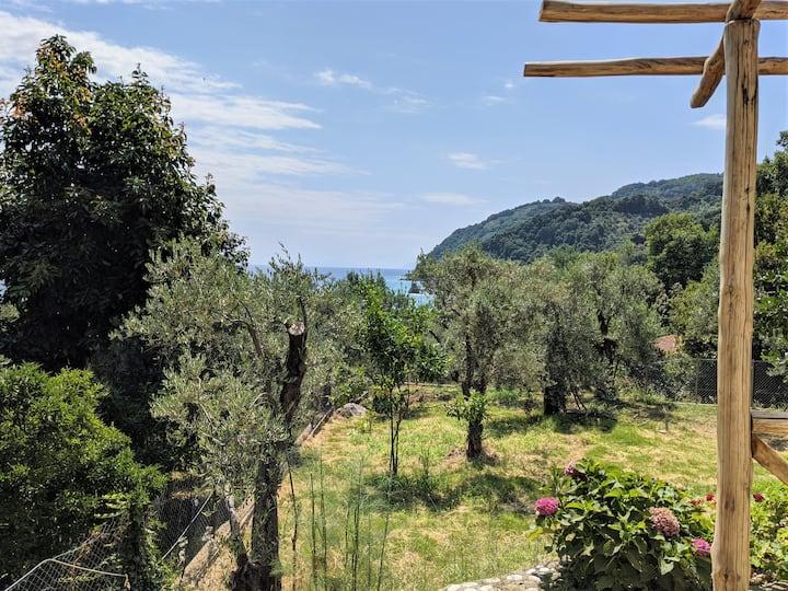 Daria's home | seaview garden
