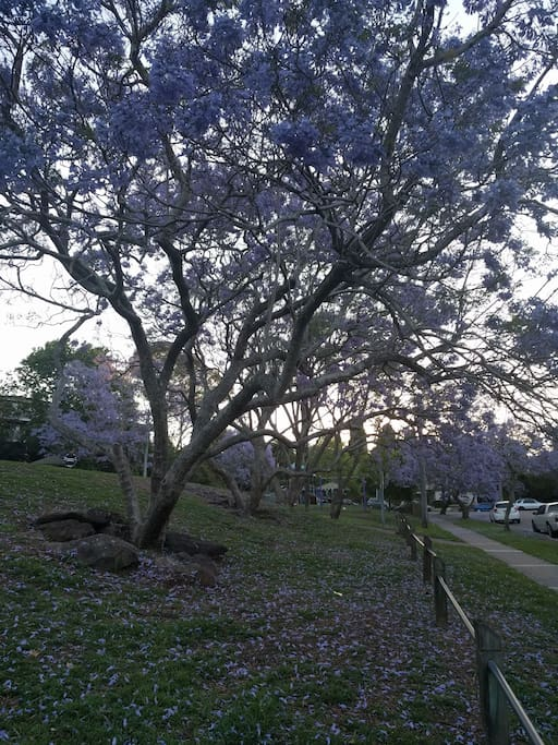 Park next door with Jacaranda trees
