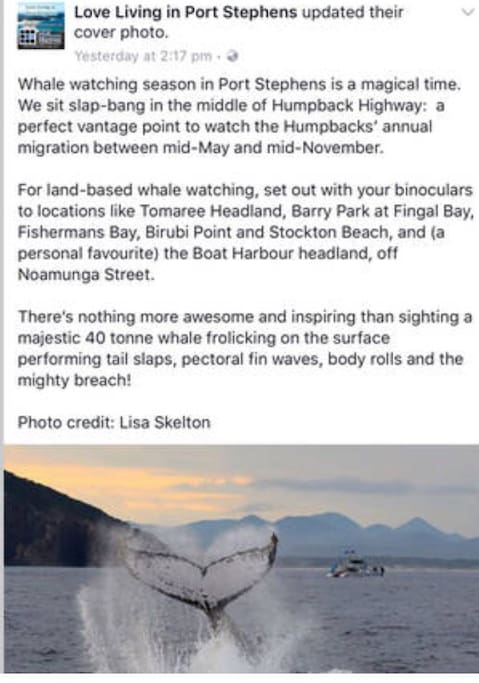 Whale watching season is here!