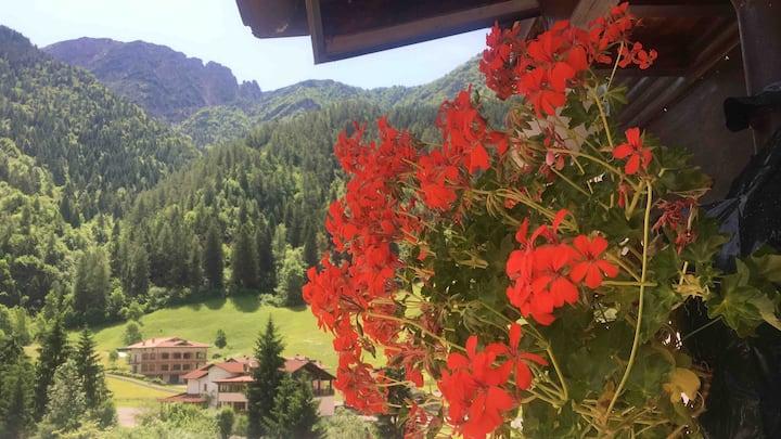 Mountain house the Italian Alps,Breathe fresh air