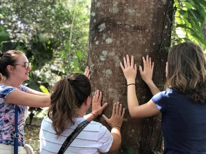 Sensaciones en el bosque en regeneración
