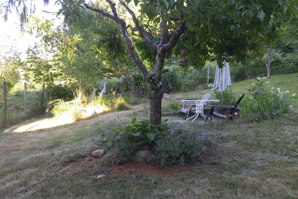 Laid back by the lavender and under the plum tree.. Look a yard for our well mannered canine friends.