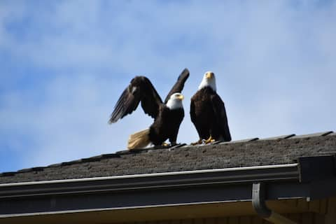 Eagles' Roost