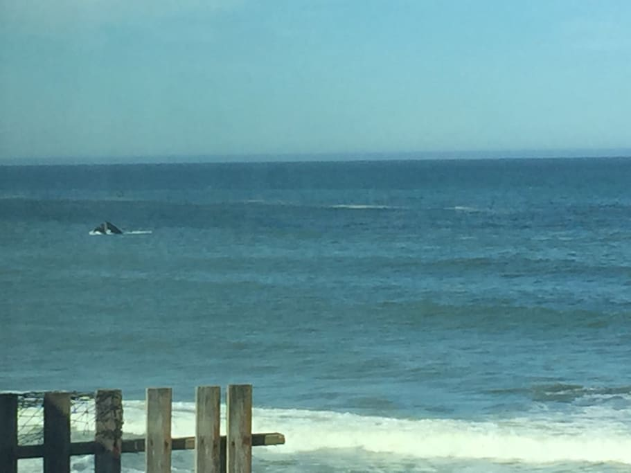 whale watching from your deck chairs  thanks l&j