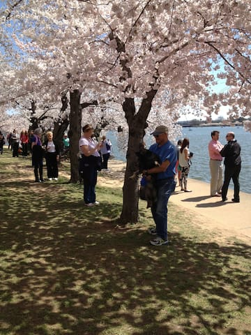 Cherry Blossom Fest*Charming Apt Near Georgetown - Washington - Departamento