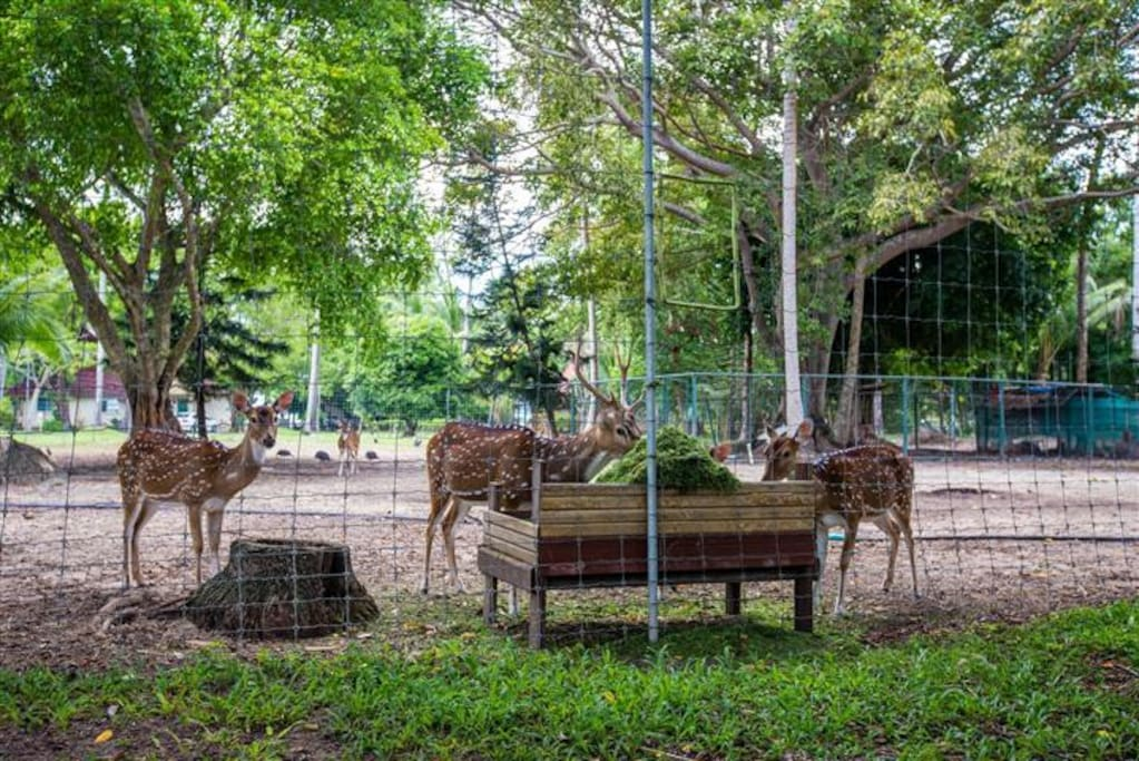 Guests are welcome to feed our deer with fruits and veggetables.