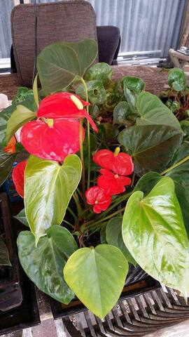 Red flowers backyard