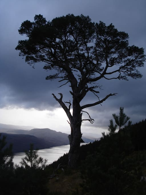 View of Loch Ness from the Great Glen Way