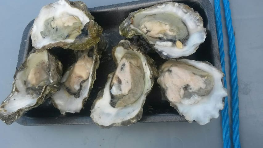 THE OYSTER RETREAT - Whitstable - Casa