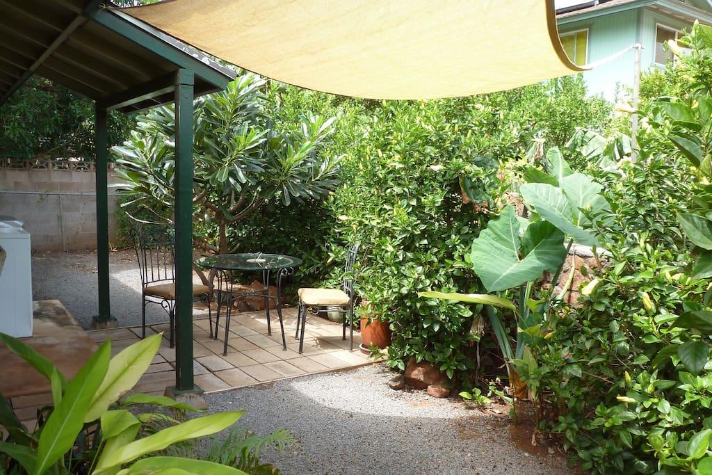 Private yard with little patio garden, enjoy the bird show.