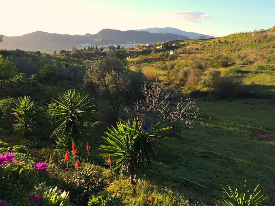 View across the valley to Cartama Pueblo
