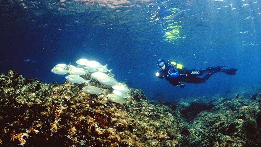 Best scuba diving or snorkeling place in Portugal