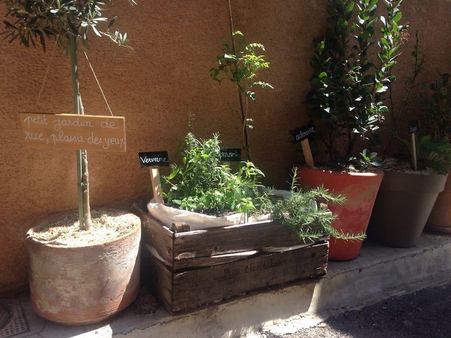 Petit jardin de rue sous la fenêtre de la chambre ☘