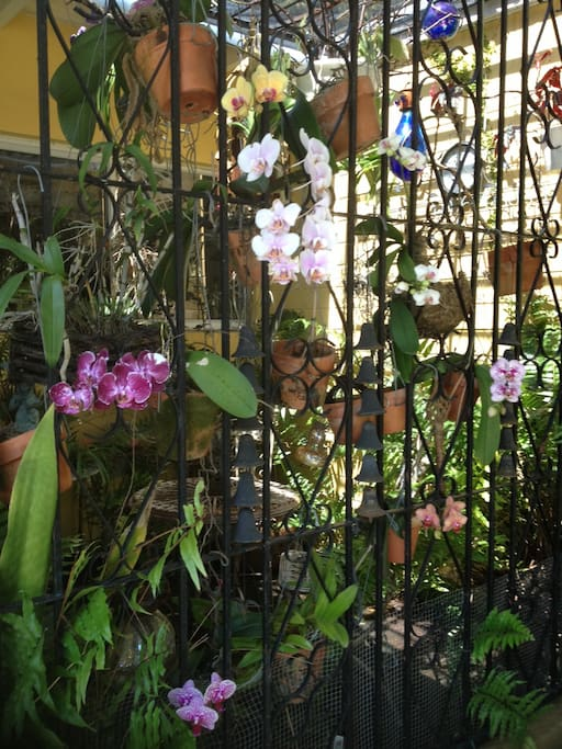 Orchids are bloomdw