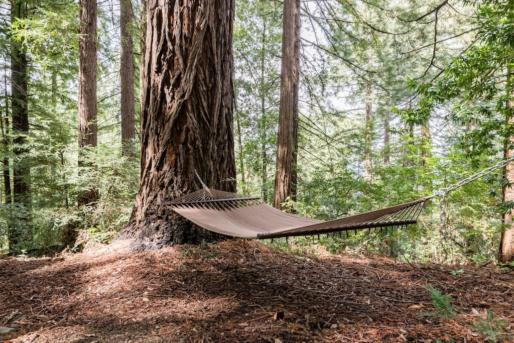 Relax in the hammock for 2 in the shade of giant redwoods.